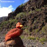 Red Duck Veneguera Gran Canaria