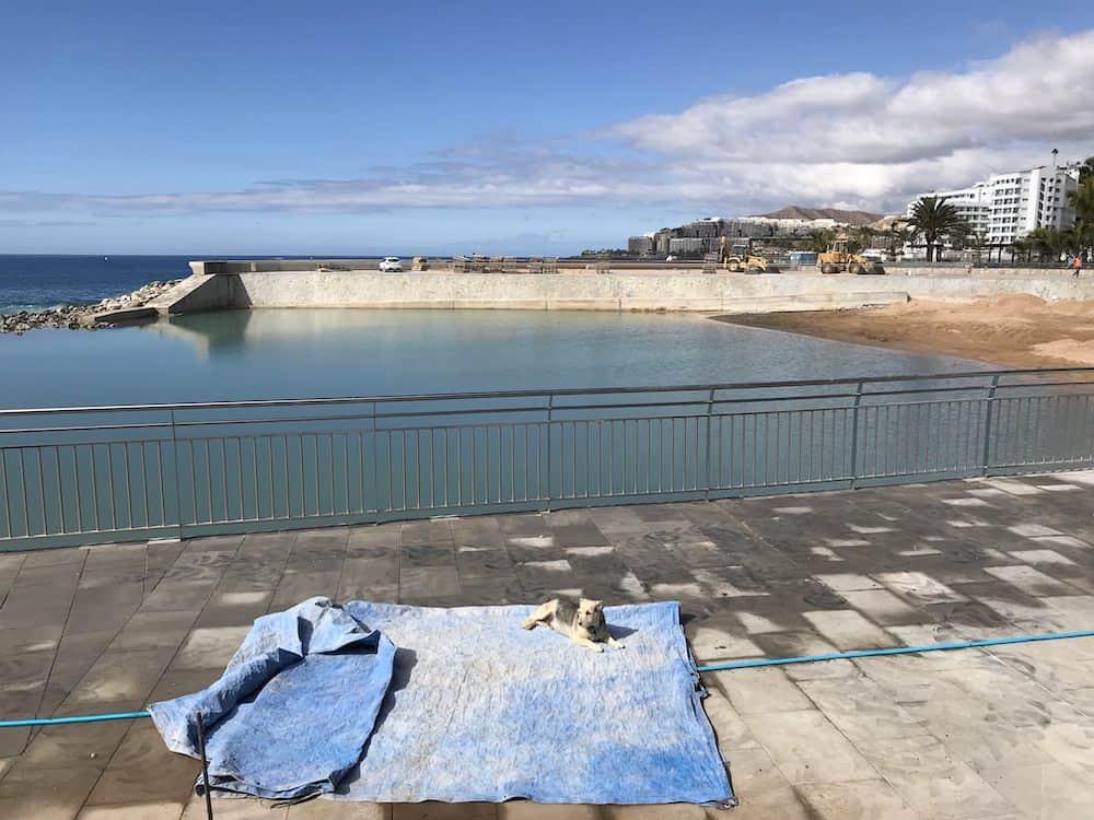 Gran Canaria Weather January Arguineguin Beach Dog 2018